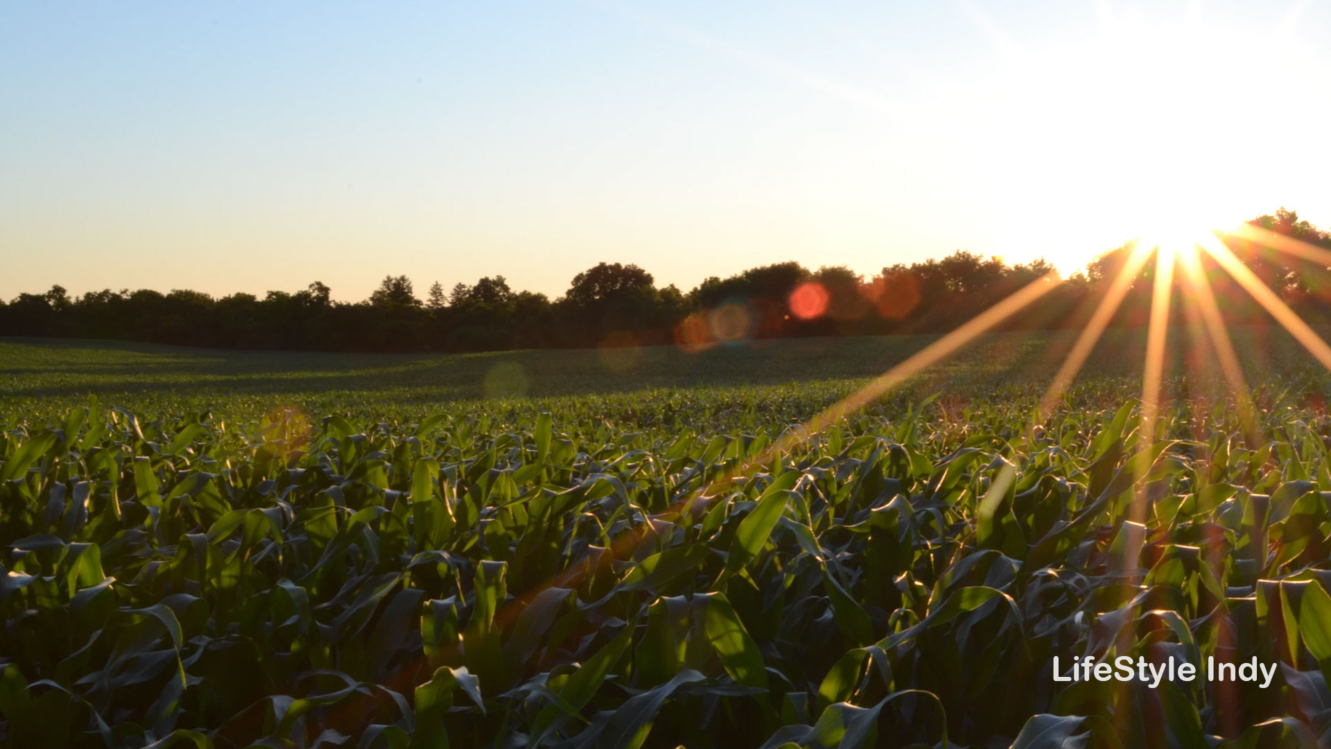 Farm Documentary for Hoosiers This Summer