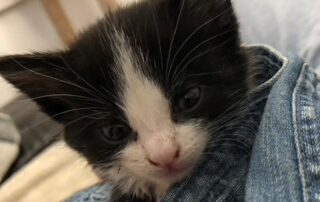 Baby Kitten in Pair of Jeans Looking for Home