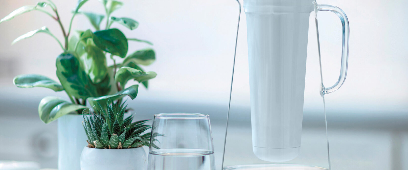 Plants and pitcher